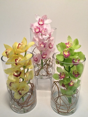 Flowers Etc Medium Cymbidium Orchid Cylinder Vase from Flowers, Etc. in Newington, CT